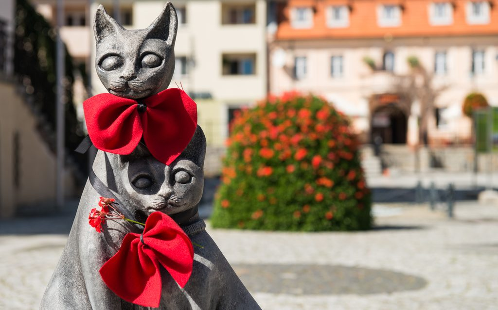 Trzebnickie koty