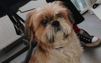Pies Trzebnica